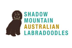 shadowmountainlabradoodles